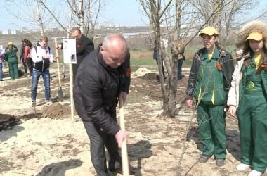 В рамках проекта «Лес Победы» возле Свято-Владимирской часовни на Мамаевом кургане высажены молодые деревья