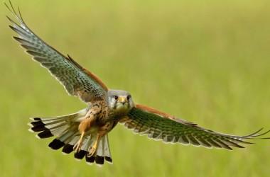 Диких птиц, находившихся на реабилитации в монастырском питомнике, выпустили на свободу
