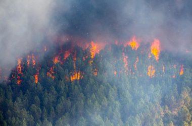 В Волгоградской митрополии молятся о прекращении лесных пожаров в Сибири