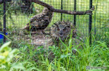 Волгоградские СМИ рассказывают об обители птиц отца Василиска