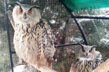 Волгоградцев приглашают посетить обитель птиц в скиту Волгоградской епархии